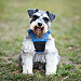 Snicker happy pup