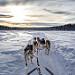 huskies, Alaska