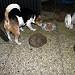 Jacky hat in der Nacht die Igel entdeckt und ist ganz entsetzt das die Igel sein Futter fressen 31-08-2016