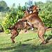 le jeu de boxer