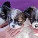 Puppies-201665.jpg