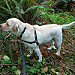 Gracie exploring the woods