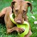Frisbee Twister