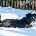 Layin in the snow