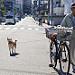 雲雷散歩犬