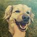 Doge Love