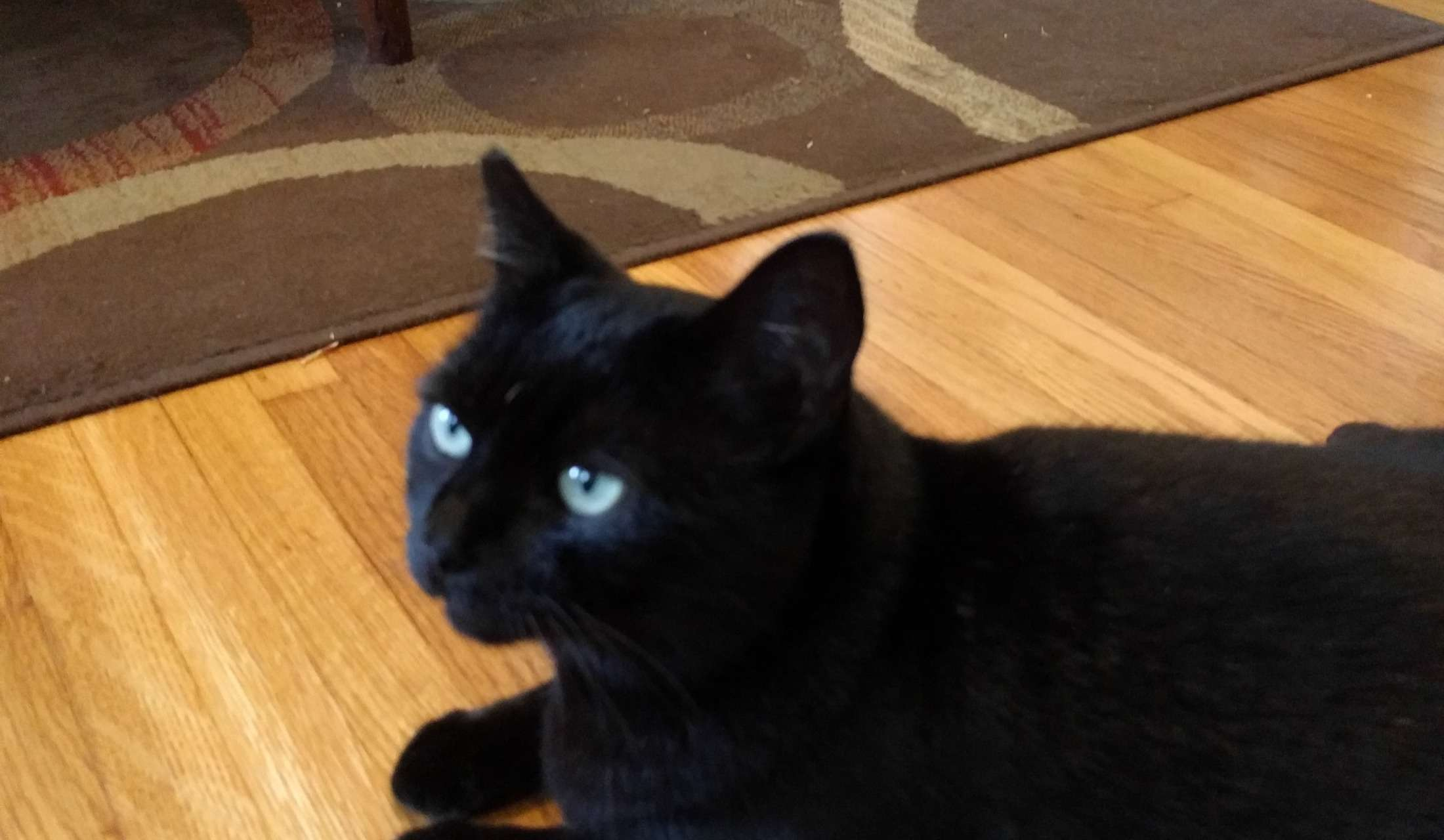 Mindmyhouse Cat Sitting Near Hollywood And Los Angeles
