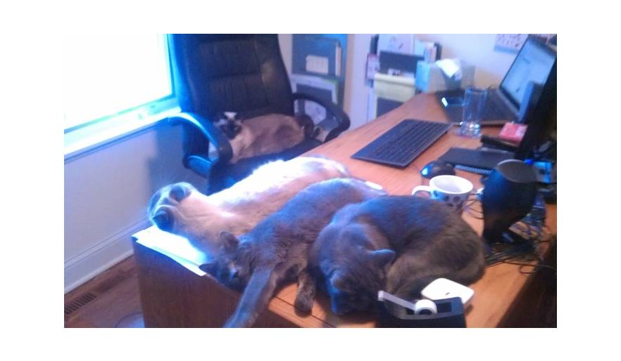 The cats love to lounge on my desk while I work.