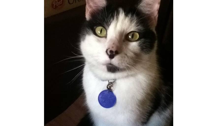 Hi, I am Percy!