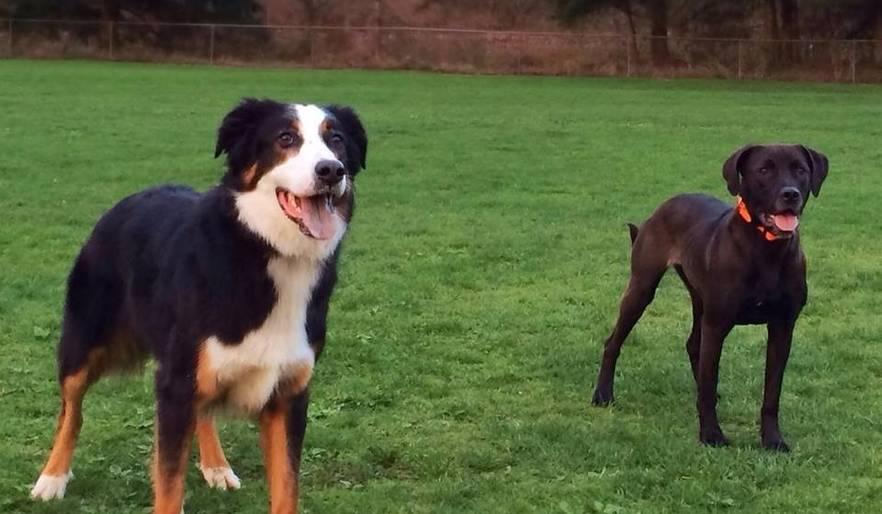 Fletcher (L) and Winnie (R)