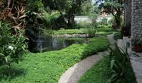 Pathway in garden near pond/waterfall