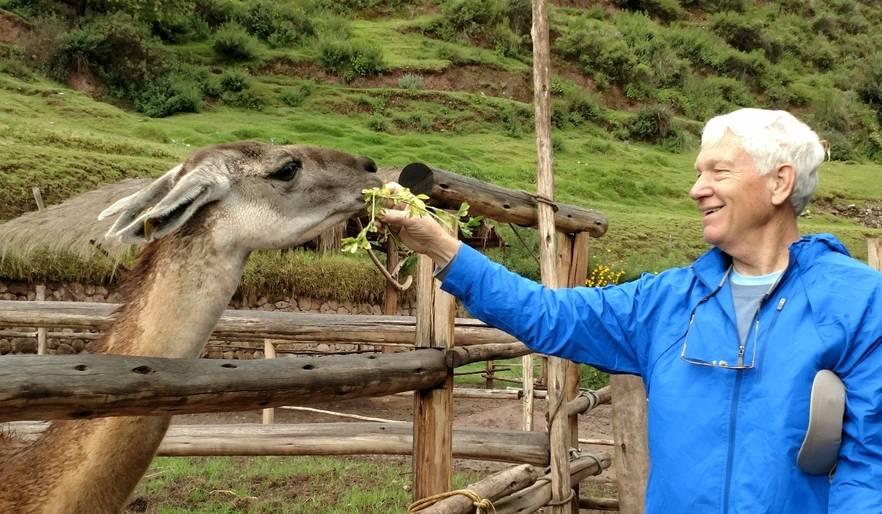 feeding llamas in the Sacred Valley, Peru