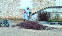 Winter pruning, Dordogne
