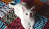Some of the delightful cats we have fostered