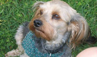 Coco, friend from housesit in France