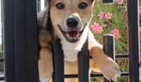 Venado Rescue Dog Mexico