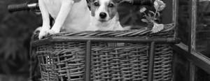dogs.tas.2