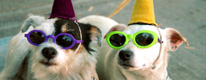 two_dogs_party_hats